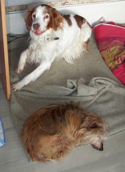 RATA aime être près de nous (29 janvier 2010) Bingo-15