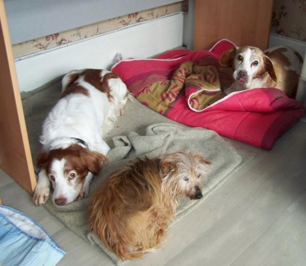 RATA aime être près de nous (29 janvier 2010) Boy-bi10