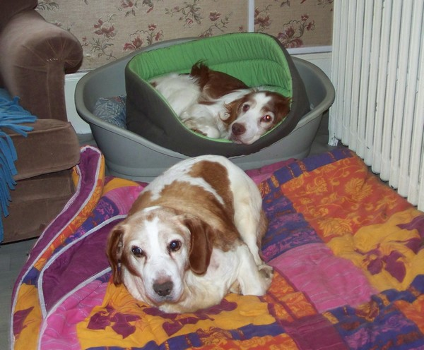BINGO aime la chaleur (4 février 2010) Boy-bi13
