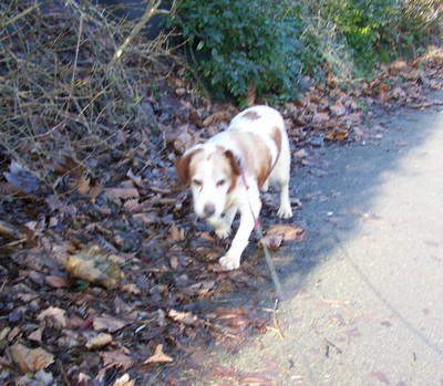 Promenade (5 février 2010) Boy-ma12