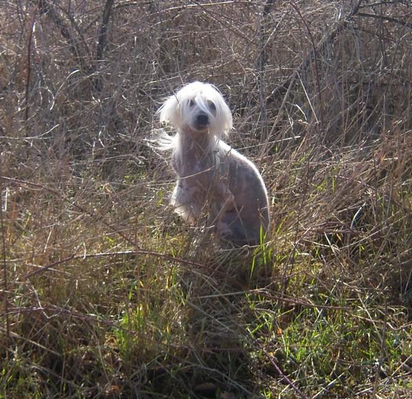 1ère promenade pour ELFIE (1er mars 2010) Djinn-11