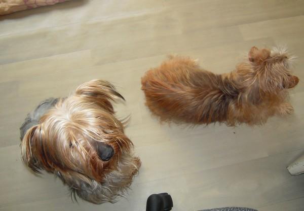 Un DOOGY + un RATA (21 février 2010) Doog-r10