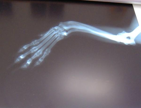 Visite vétérinaire (22 février 2010) Doogy-14