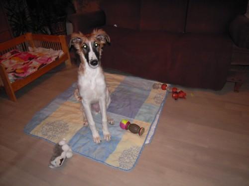 ELFIE a des jouets (26 février 2010) Elfie-26