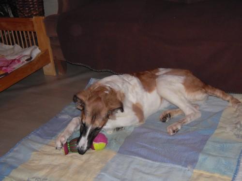 ELFIE a des jouets (26 février 2010) Elfie-29