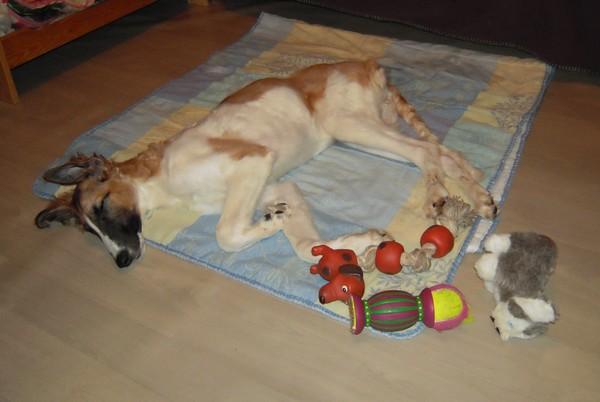 ELFIE a des jouets (26 février 2010) Elfie-31