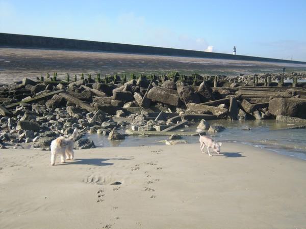 ELFIE à la plage Elfie613