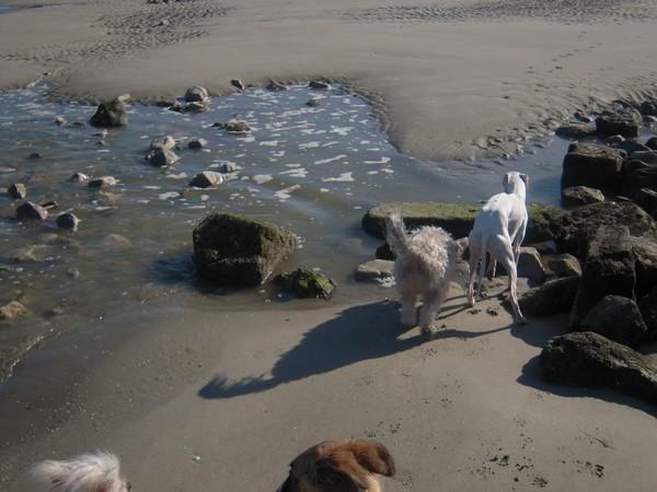 ELFIE à la plage Elfie615