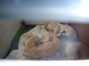 Le reportage du sauvetage de MELERO (2 février 2009) Enfin_11