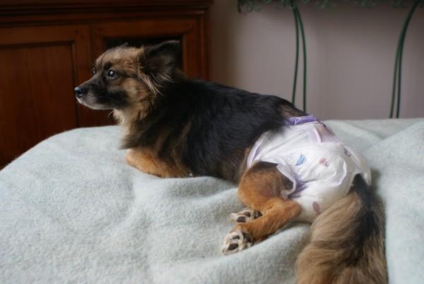 Câlins, au lit (14 février 2010) Fanett19