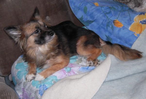 FANETTE va être stérilisée (22 février 2010) Fanett26