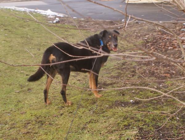 Spécial Marraine Lea (15 février 2010) Max-pr13