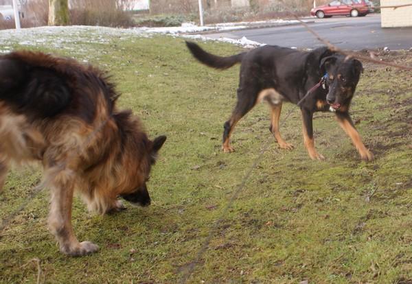 VIP et MAX en balade (15 février 2010) Max-vi16