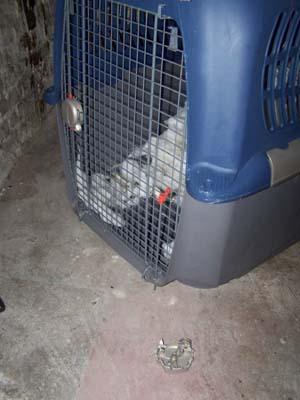 La cata (23 février 2009) Me-cag10