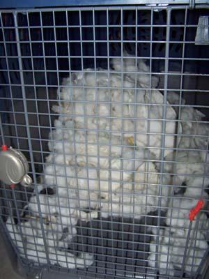 La cata (23 février 2009) Me-cag11