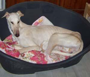 MELERO a perdu ses attributs (17 février 2009) Me-pan10