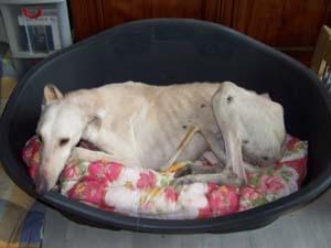 La cata (23 février 2009) Me-pan12