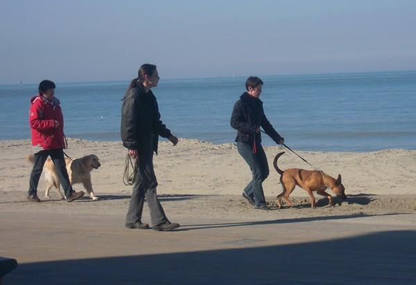 VIP et MAX à la plage (2 mars 2010) Naty-110