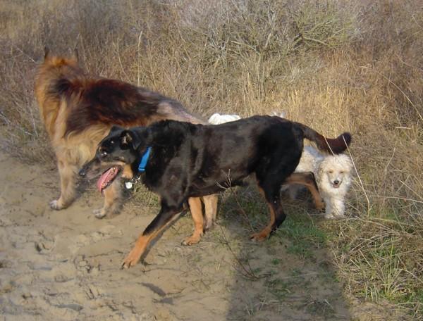 MAX dans les dunes (24 février 2010) Prom-f33