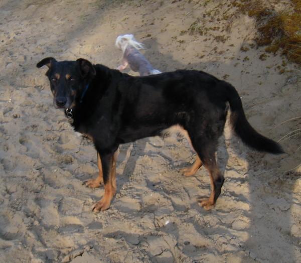 MAX dans les dunes (24 février 2010) Prom-f34