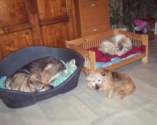 RATA aime être près de nous (29 janvier 2010) Rata-t10