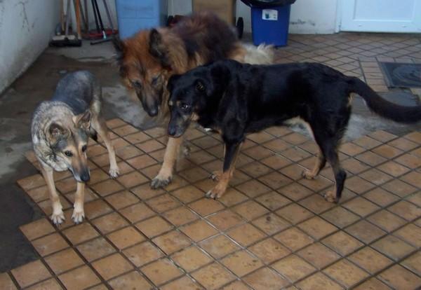 Visite vétérinaire (1er février 2010) Trois10