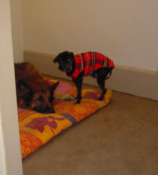 Le tout petit et le très grand (12 mars 2010) Vip-ac10