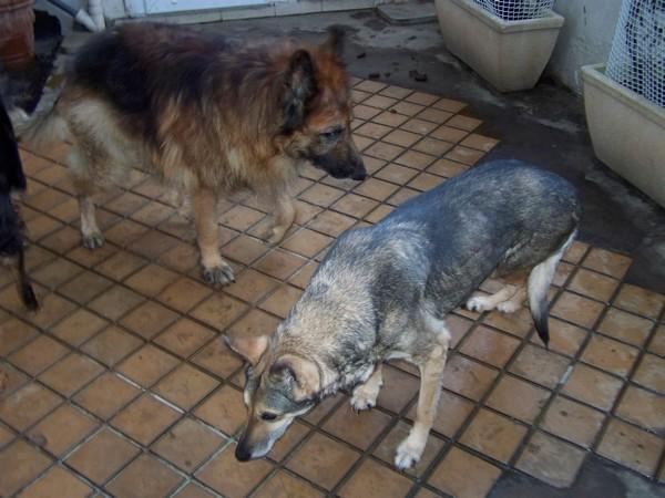 Visite vétérinaire (1er février 2010) Vip-ch10