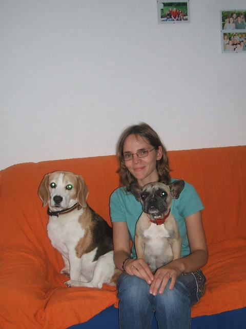 RAFIA, très jolie beagle femelle adulte, 10 ans (61) Dscf7914