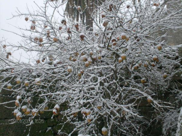 Castedo Branquinho/ Neve Neve510