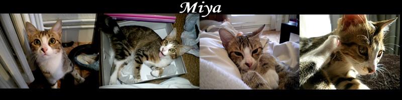 Tatiana (rebaptisée Miya) Signat10