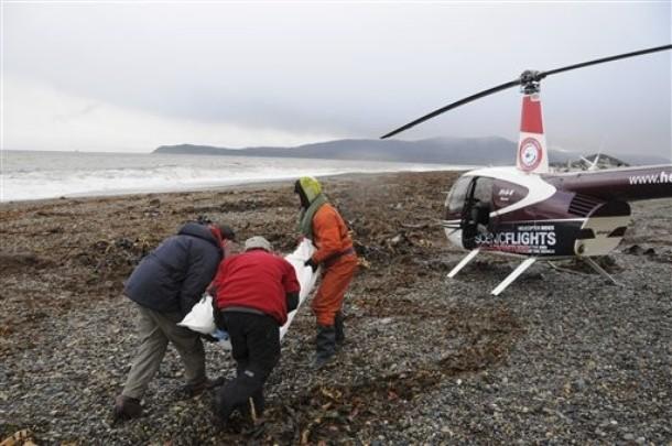 Accidents et tempêtes en mer : les news - Page 5 610x27