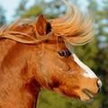 Chevaux de propriétaires [11 chevaux] - Page 3 Outlaw10