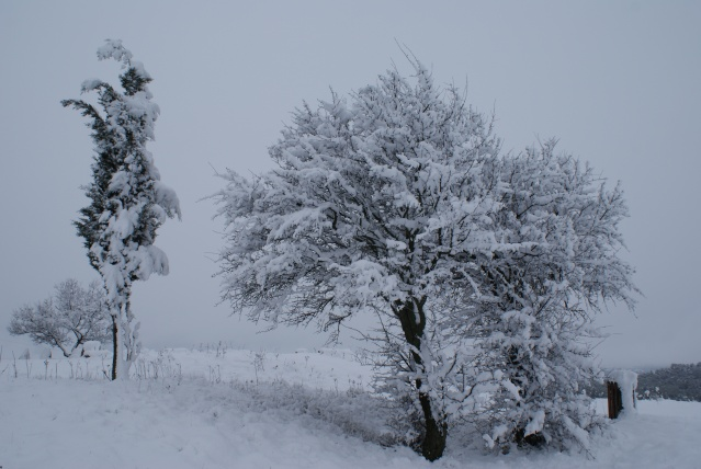 manteau blanc a nissan lez enserune Dsc03620