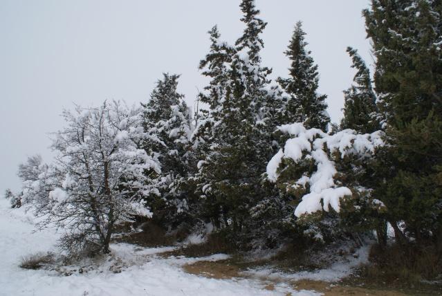 manteau blanc a nissan lez enserune Dsc03622