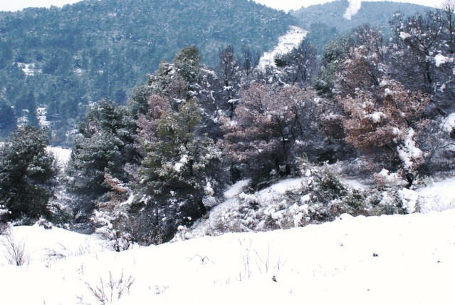 manteau blanc a nissan lez enserune Dsc03812