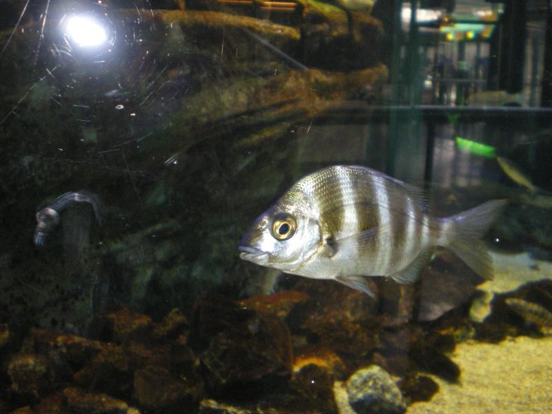 aquarium a la cite de la sciences Imgp2423