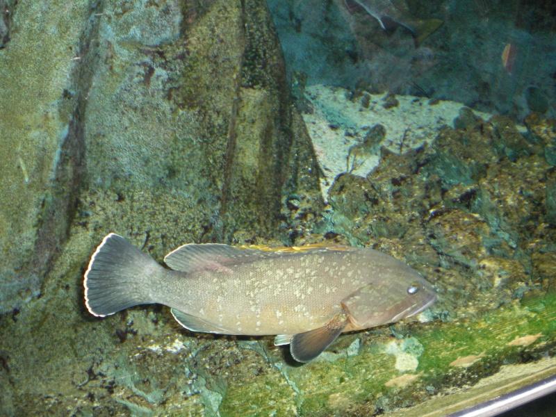 aquarium a la cite de la sciences Imgp2511