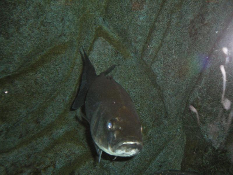 aquarium a la cite de la sciences Imgp2512