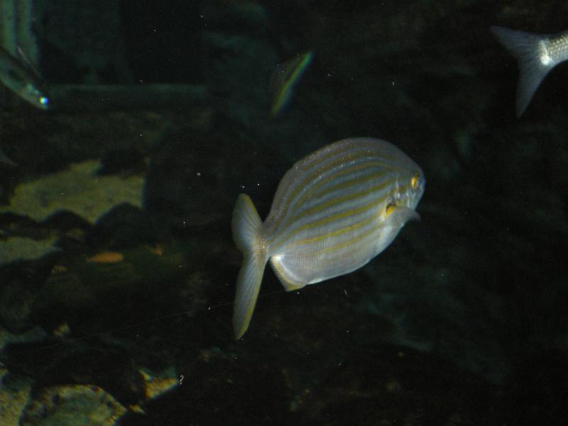 aquarium a la cite de la sciences Imgp2513