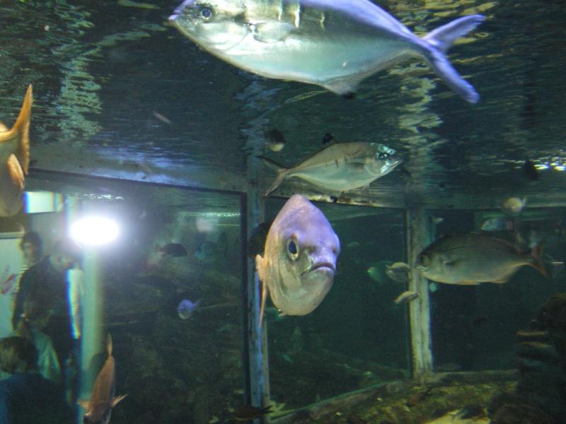 aquarium a la cite de la sciences Imgp2514