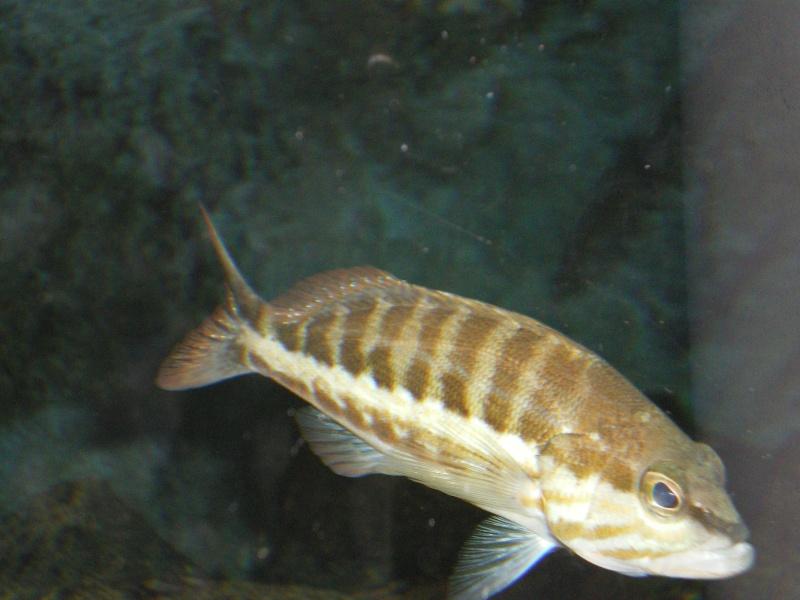 aquarium a la cite de la sciences Imgp2515