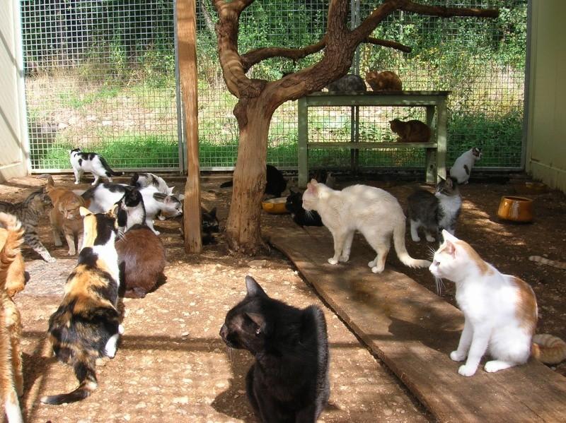 Nos chats au refuge Dscn2410