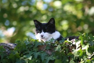 Perdu chatte blanche et noire Img16710