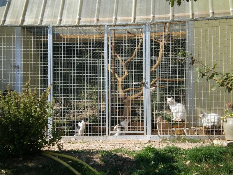 Nos chats au refuge P9270013