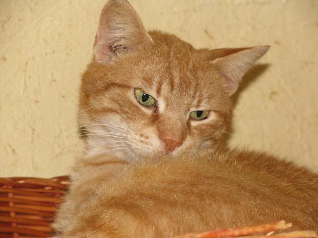 Phantom - tigré roux - né en juillet 2003 *** Img_0922
