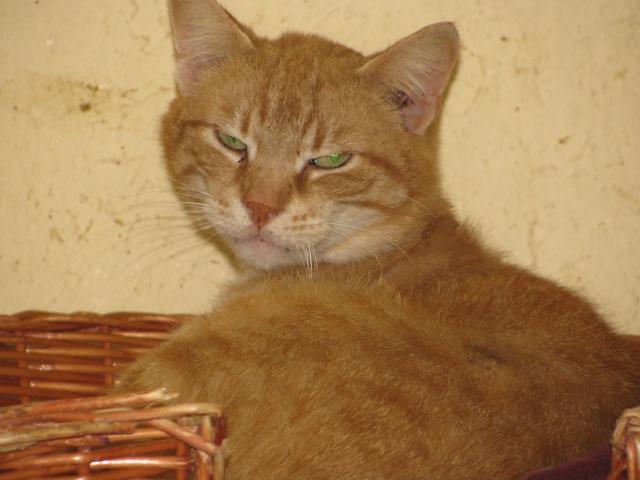 Phantom - tigré roux - né en juillet 2003 *** Img_0923