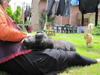 """Lalo petit labrador noir """"60"""".Au refuge de Filémon - Amiens (80) Img_2236"""