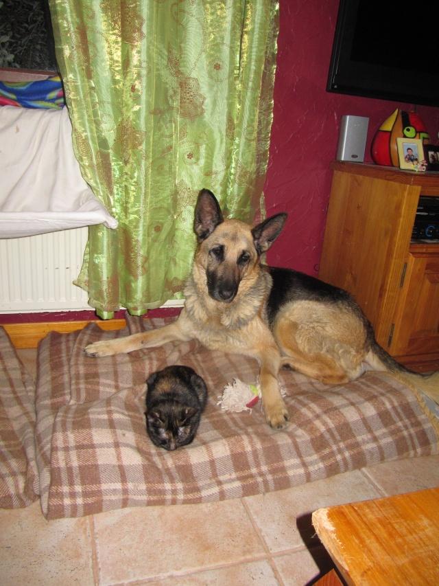 Roxanne, BA de 10 ans(19/10/2000) - Refuge de Filémon (80) Img_5711