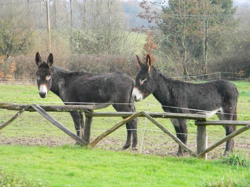 Mes ânes, des ânes de courses ! Sous la neige P1 Dscn0310